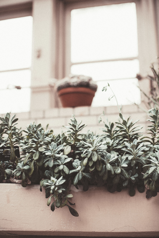 greenhouse-13.jpg