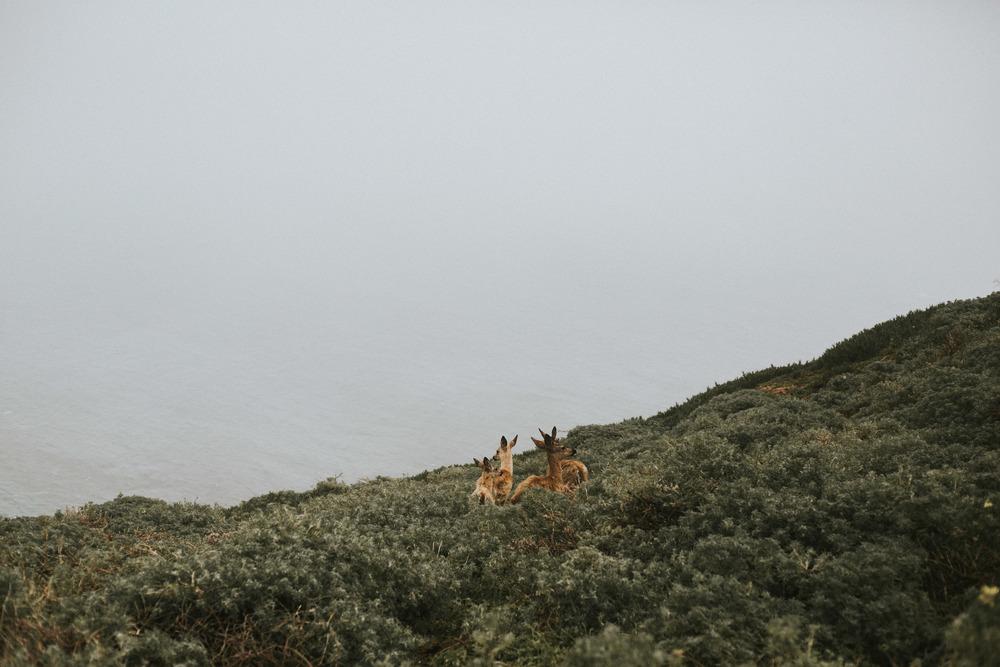 pointreyes-fog-52.jpg