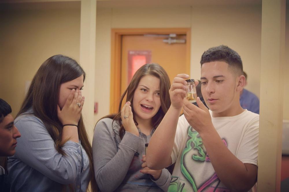 Coronado students observe insect specimens