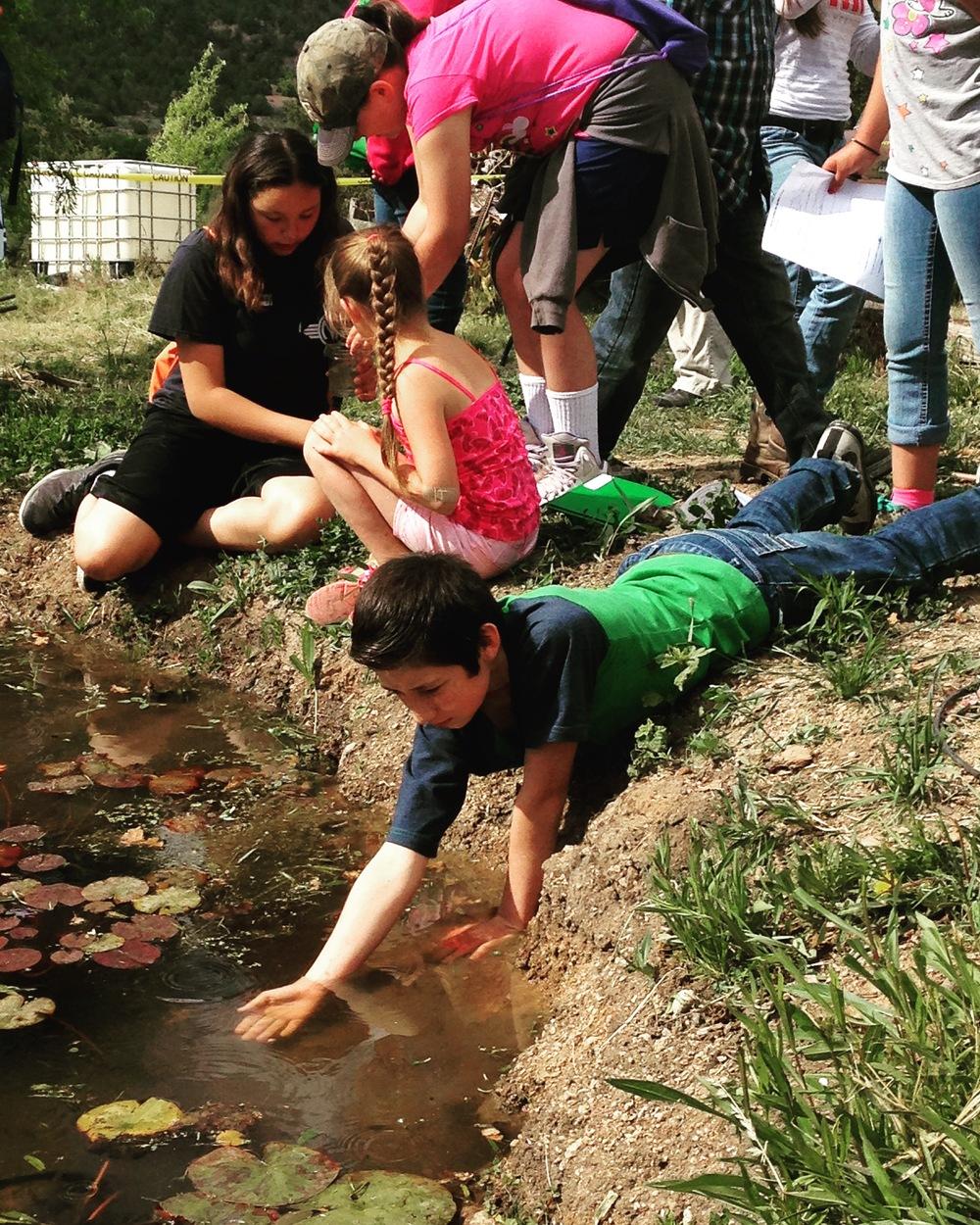 Students observe macroinvertebrates