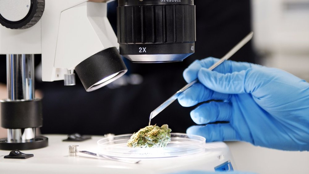 Tilray Becomes North America's First GMP Certified Medical Cannabis Producer