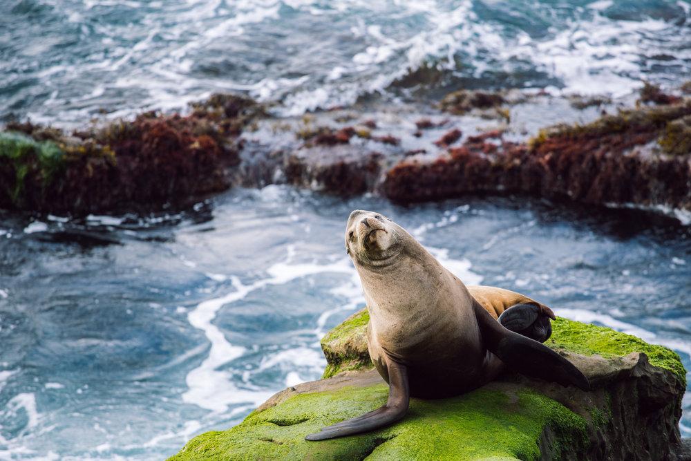 Sea Lion (1 of 1) 1.jpg