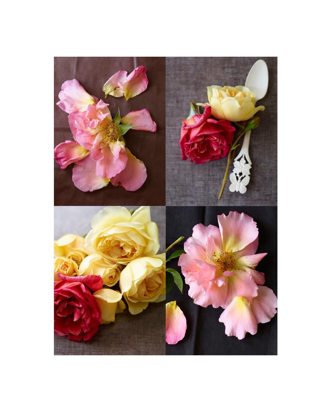 3 LB_*Roses.jpg