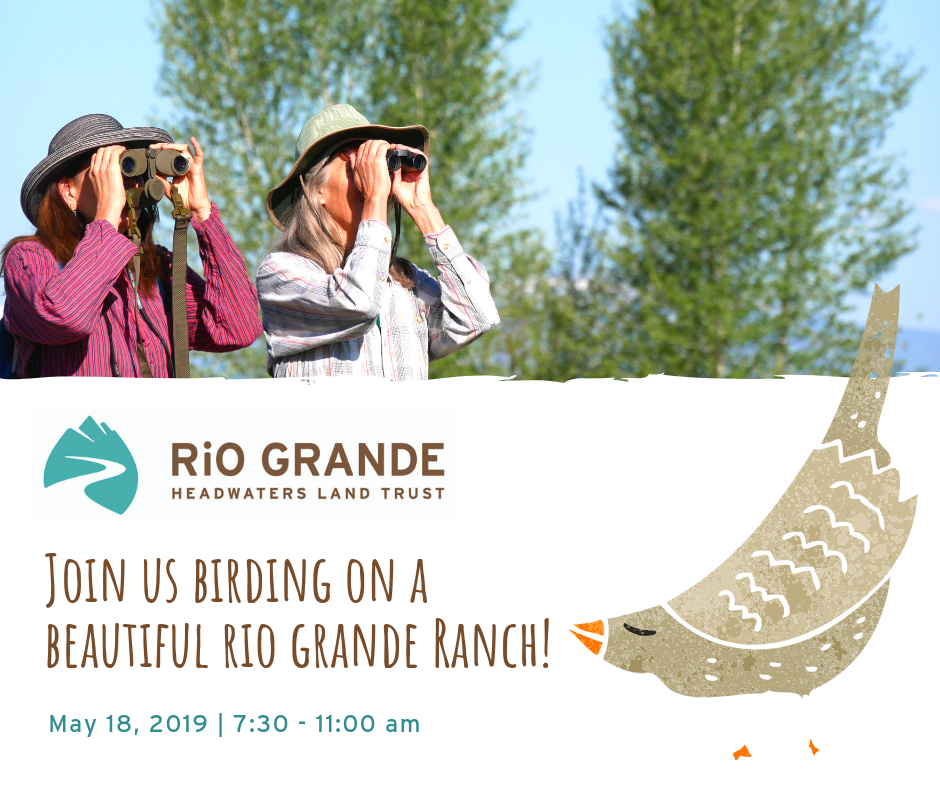 Grab your binoculars and head out with us for a morning of bird watching on one of our beautiful conserved easements! The River Ranch provides riparian, wetland, and shrub habitats that support a wide array of wildlife, including a variety of waterfowl and shorebirds.