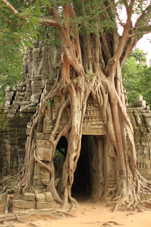 cambodia-angkor-ruins-tree_copyright-jpkphoto.jpg