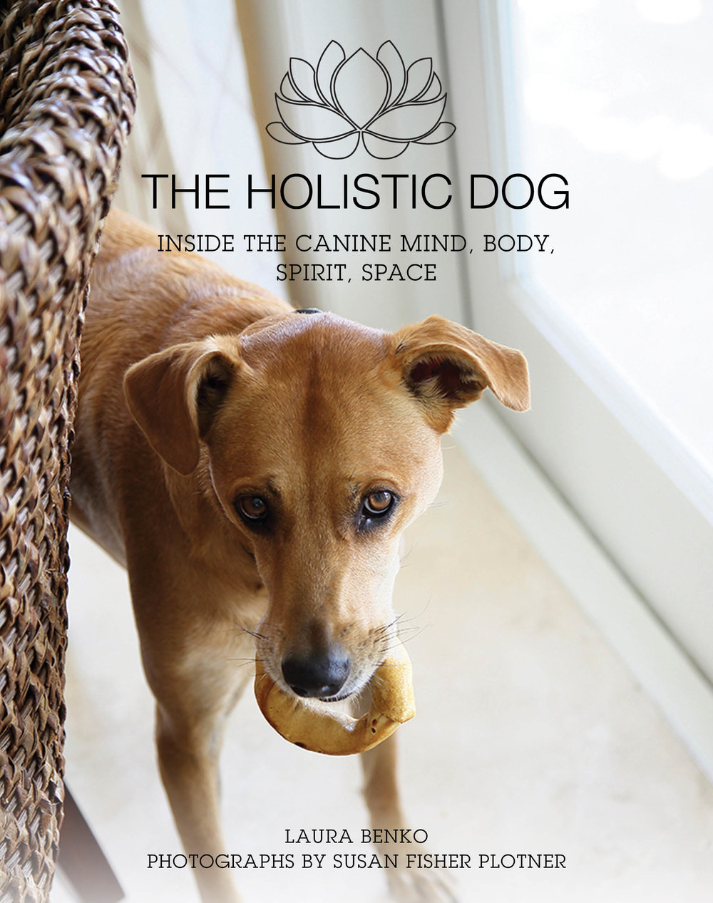 Holistic Dog_FC.jpg