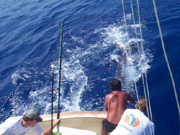 Marlin catch off Kona, Hawaii