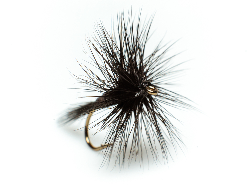 Black spinner – dry fly