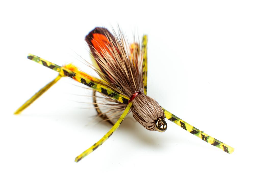 Grasshopper – terrestrial