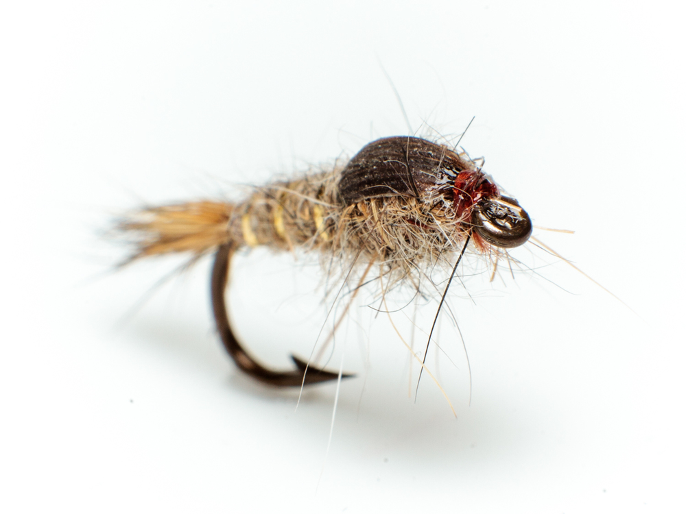 Gold ribbed hares ear – wet fly