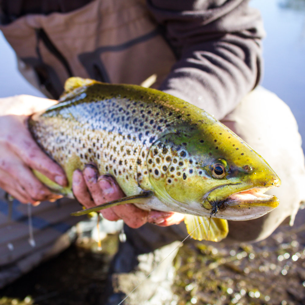 Guided fly fishing in Tasmania