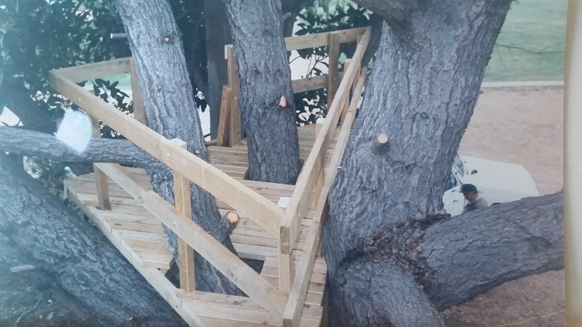 Tree platform for a Margaret River property.