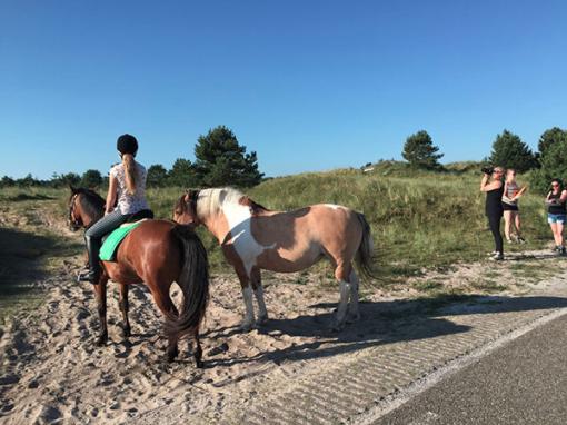 We hadden niet alleen mazzel met het weer, maar ook met super brave pony's!
