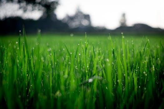 greenfield 2.jpeg