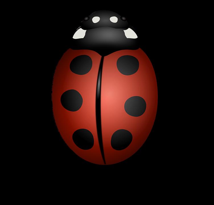 ladybug-156624_960_720.png