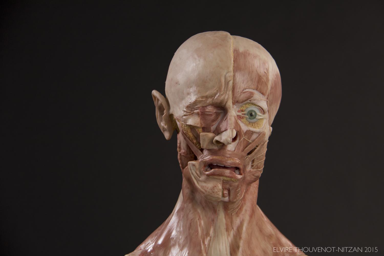Wax Sculpture - the Anatomy of Crying — Elvire Thouvenot-Nitzan