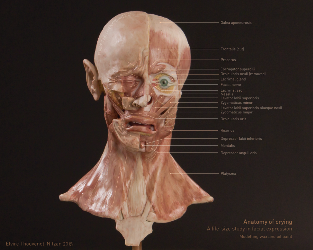 Wax Sculpture - the Anatomy of Crying — Elvire Thouvenot-Nitzan