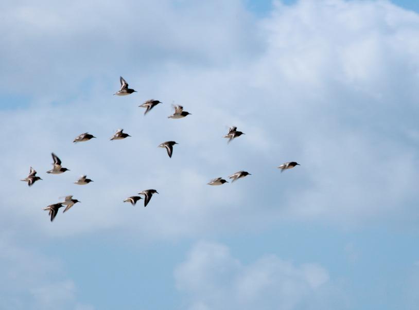Bei einem Flügelschlag als Maßeinheit haben wir sofort die Leichtigkeit von über uns hinwegziehenden Vögeln im Kopf. Oder den von Schmetterlingen im Sonnenuntergang.