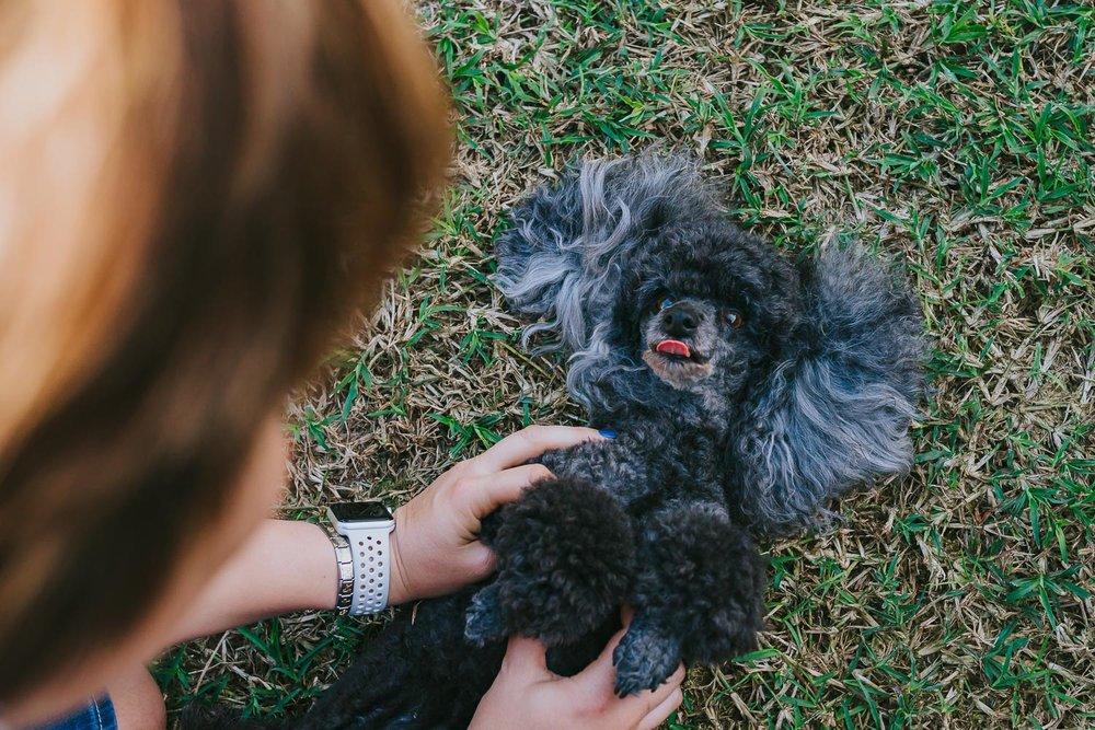 Poodles-86.jpg