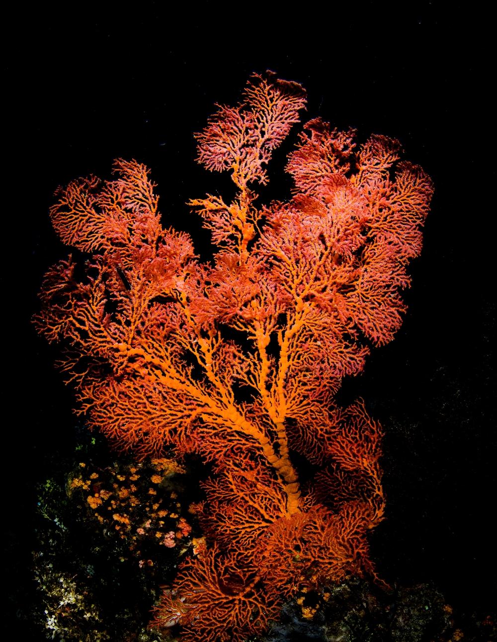orange coral.jpg