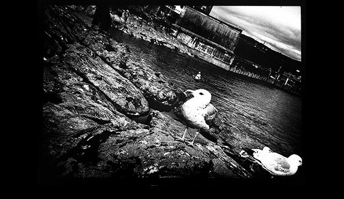 A-Glasgow-Fair-23.jpg