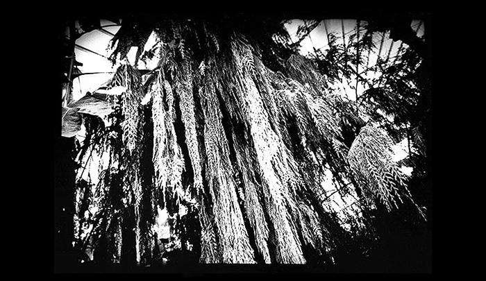 Plantation-02.jpg