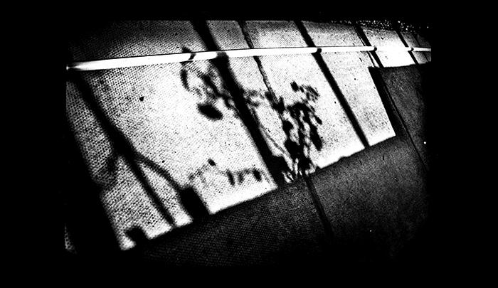 Plantation-04.jpg
