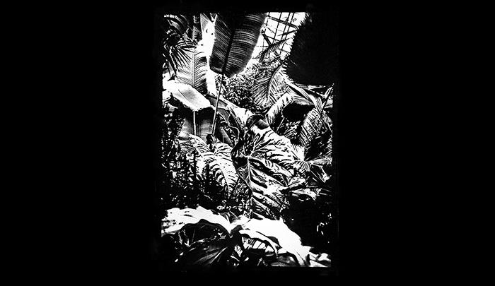 Plantation-08.jpg