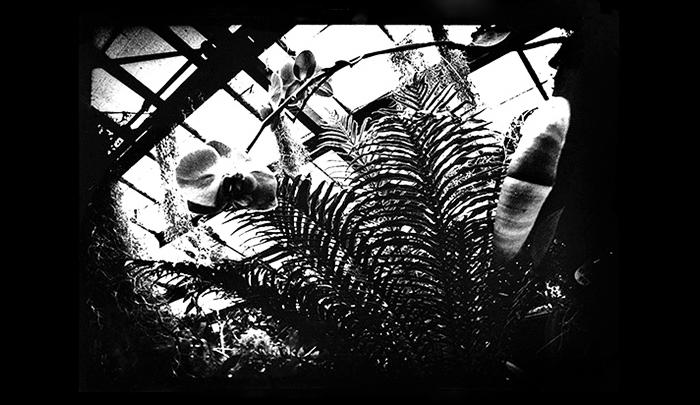 Plantation-10.jpg