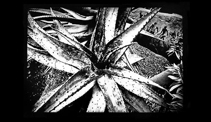 Plantation-09.jpg