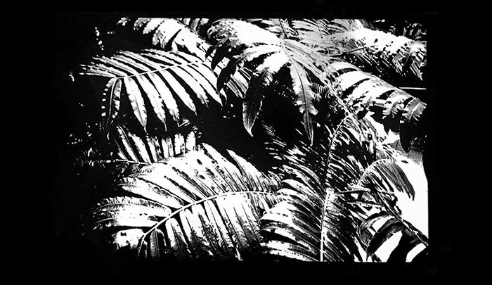 Plantation-12.jpg