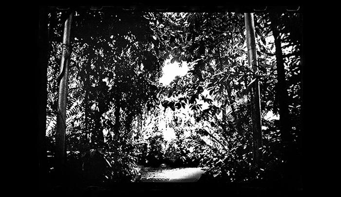 Plantation-14.jpg