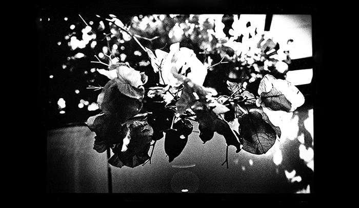 Plantation-15.jpg