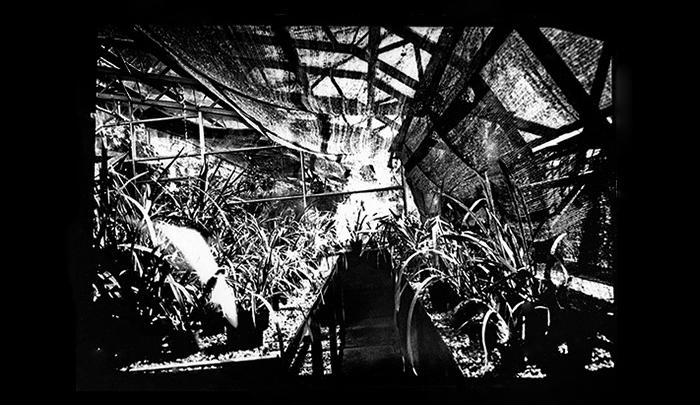 Plantation-16.jpg