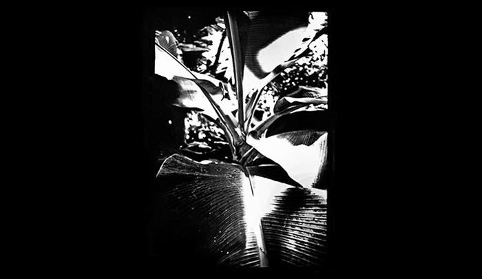 Plantation-18.jpg