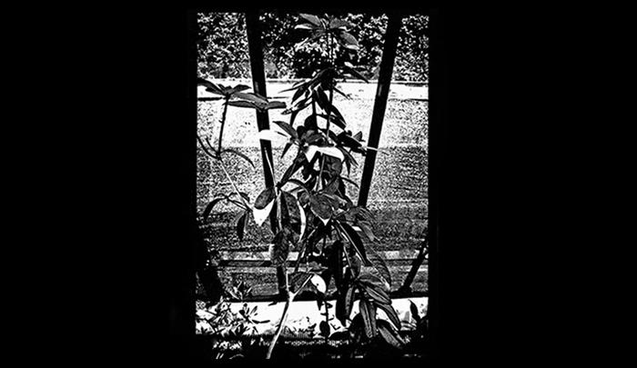 Plantation-20.jpg
