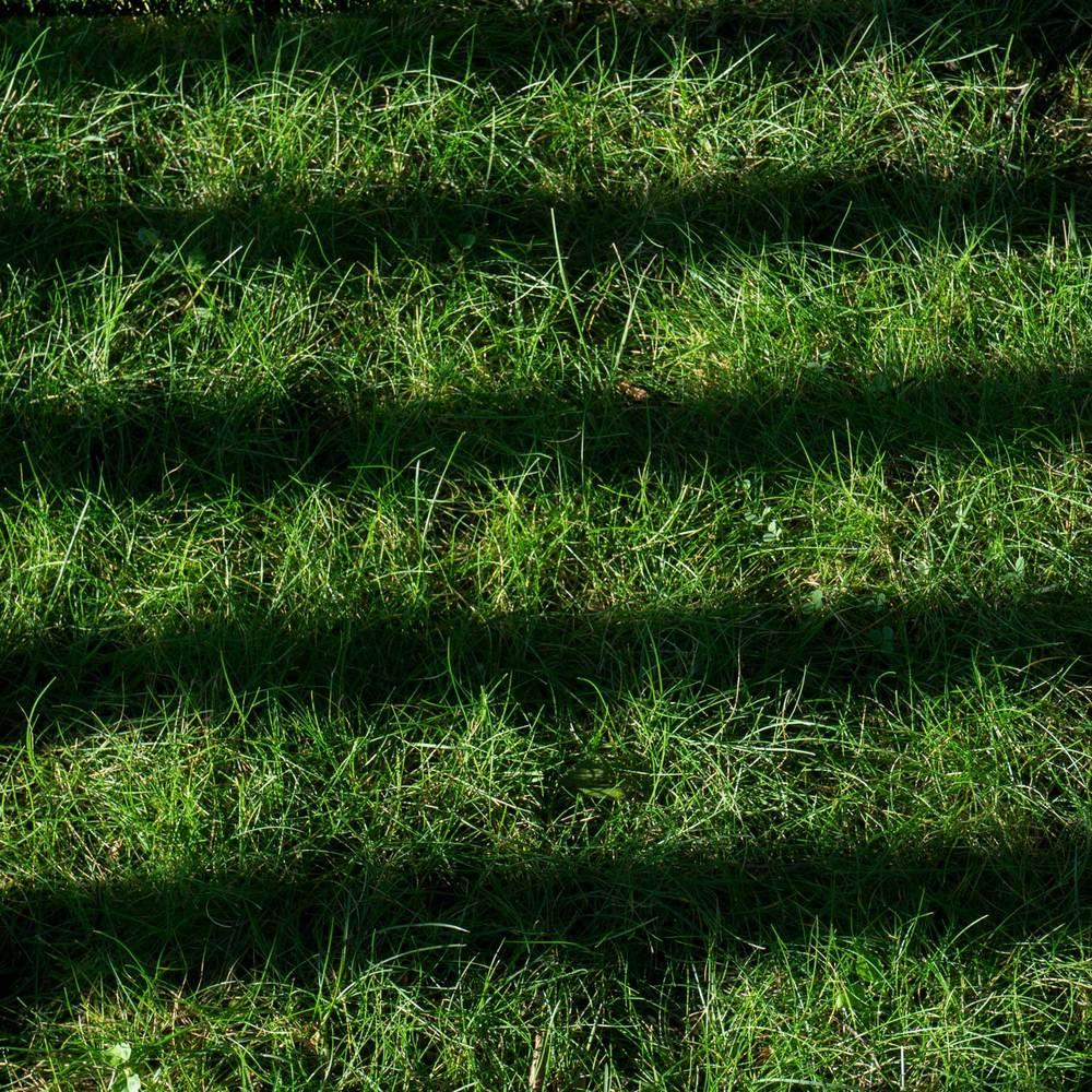 Grass-and-shadow-Squared.jpg