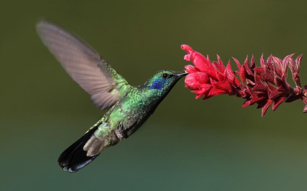 hummingbird-1024x640.jpg