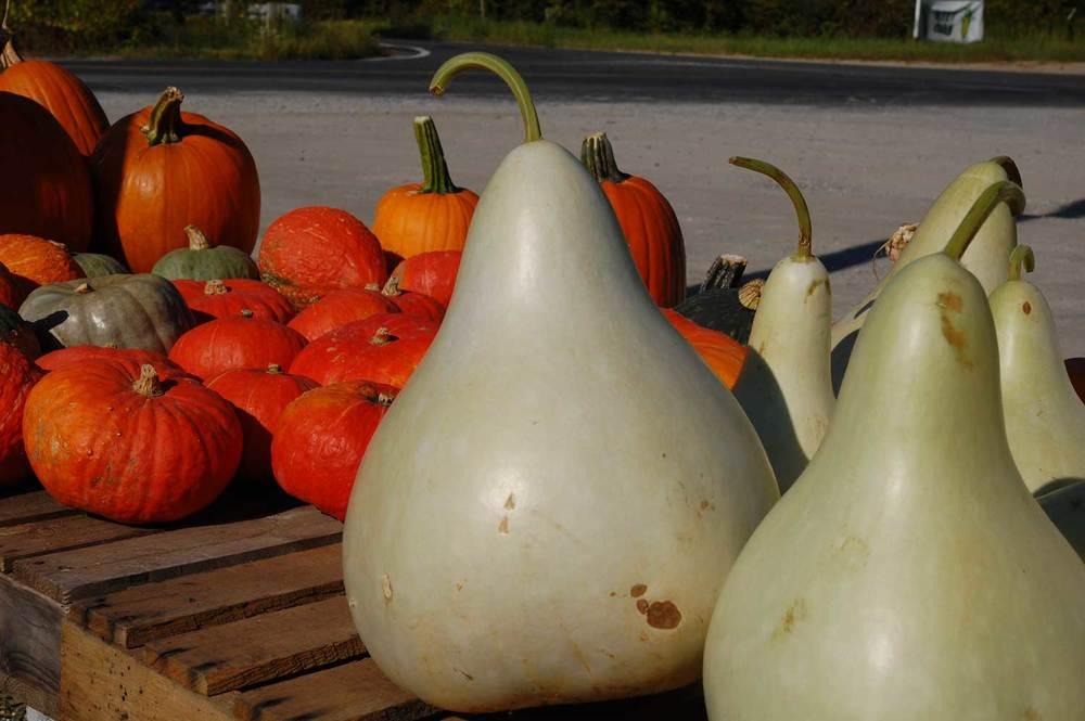 smaller-gourdsDSC_1809.jpg
