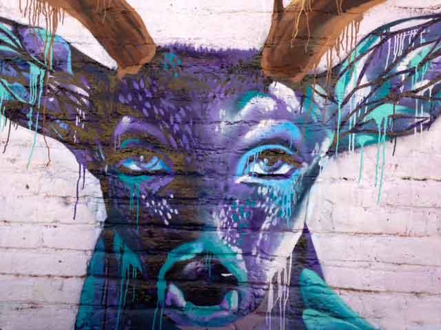 deer-photo.jpg