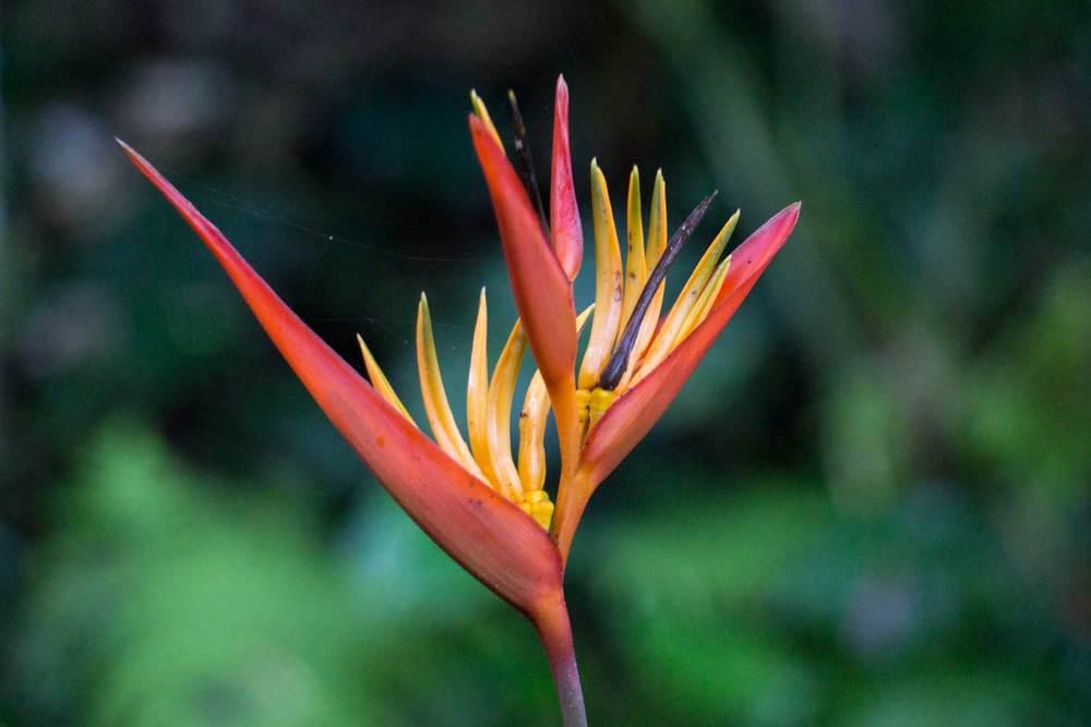 Bird-of-paradise-DSC01122.jpg