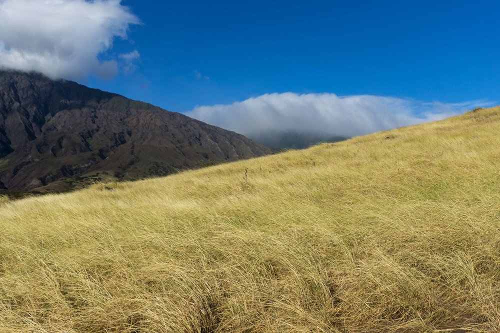 _--Grasses-hana-Hill-cropped sized DSC03574.jpg