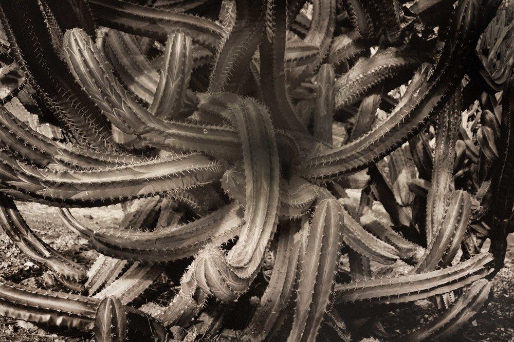 Cactus-snake-l2-DSC03613.jpg