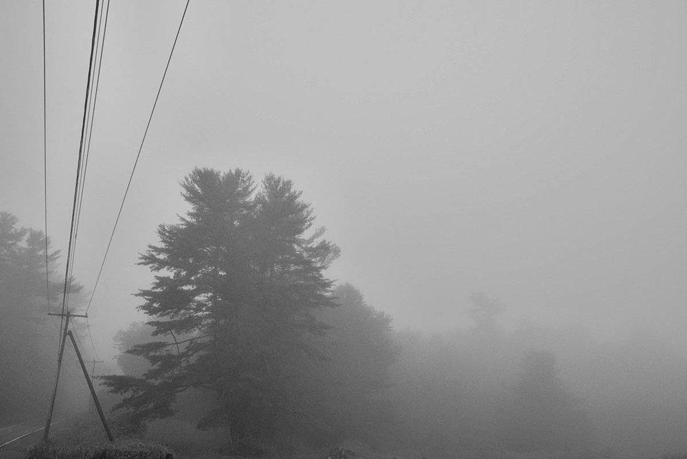 Tree and Pole lighter DSC5655 copy.jpg