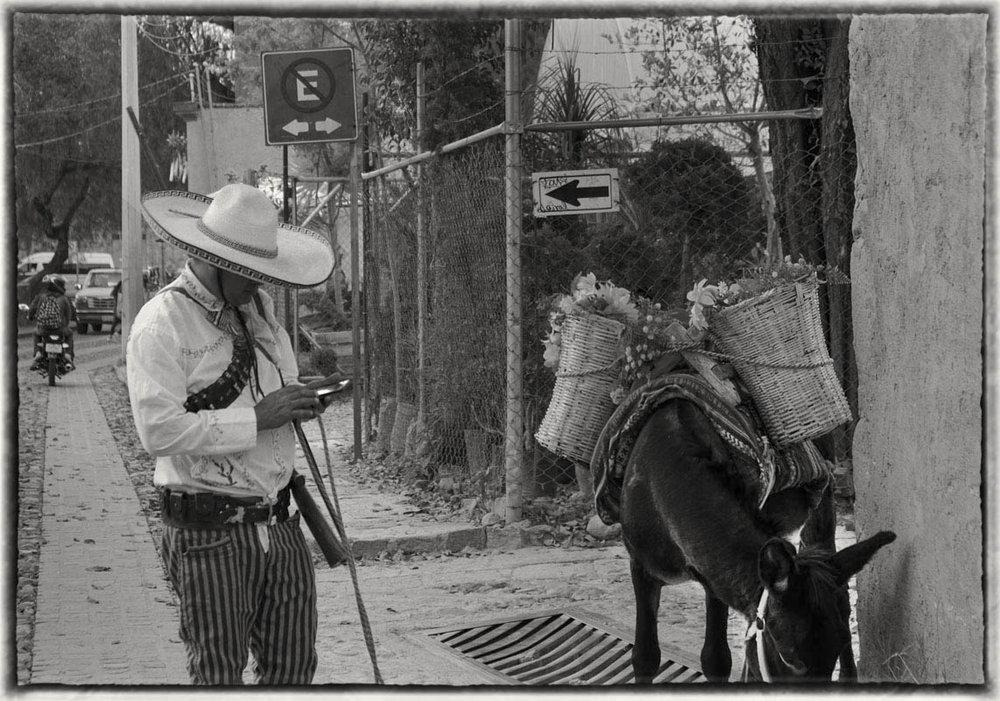 Donkey and guy cell DSC07837 copy.jpg