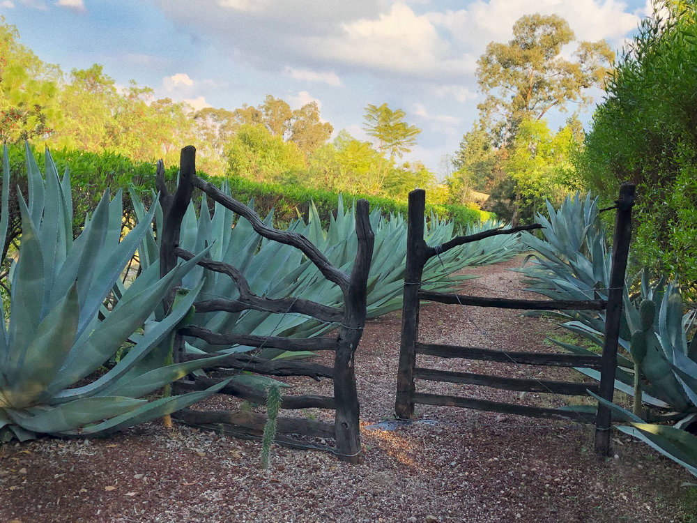 Agave-Gate-Website-1.jpg