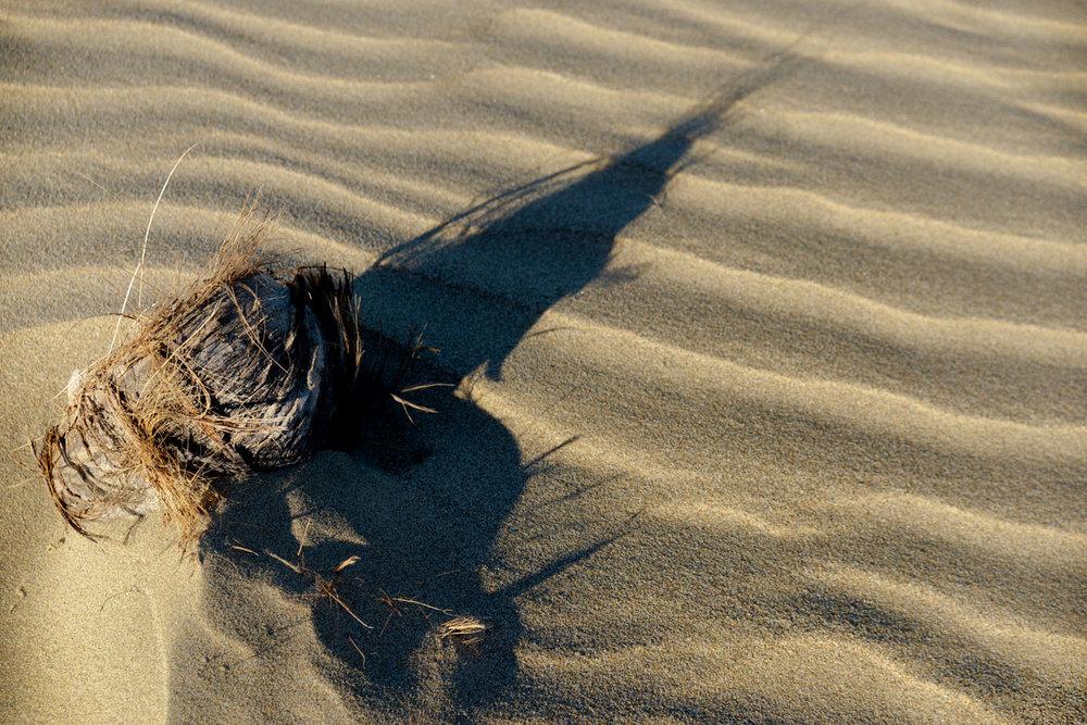 _Nest_ and sand_DSC9368.jpg