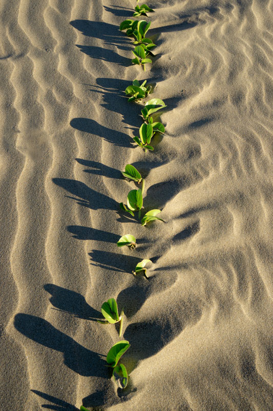 Sand ripple_DSC9365.jpg
