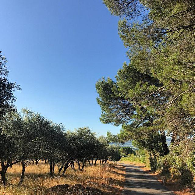 Bonjour à tous! Belle journée à #lourmarin #luberon #provence