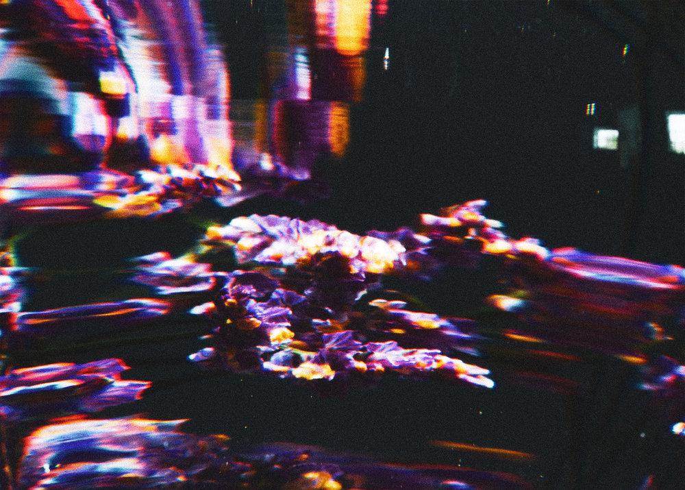 FLOWER_PHOTO_2.jpg